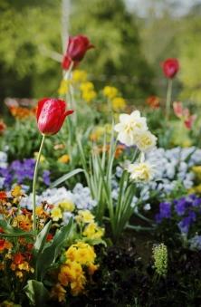 Flores Monceau-París