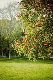 Árbol Monceau-París