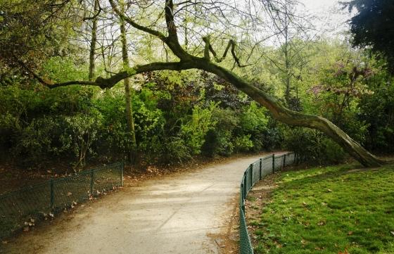 Camino con árbol Monceau-París